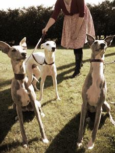 PET DOGS ENJOY THE GARDEN